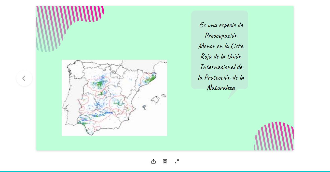 Screenshot_2020-03-08-EL-PINO-PIÑONERO3